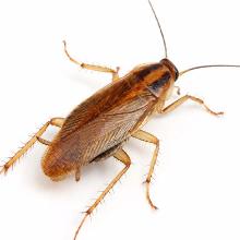 Дезинсекция в Волгограде - уничтожение тараканов, клопов и других насекомых
